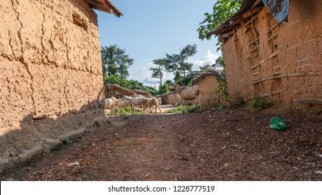 African village in Ivory Coast