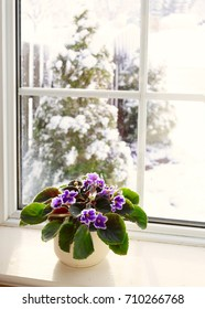 African violet on a window sill with a view of a snowy winters day.