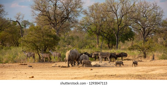 African wildlife assortment with rhinos, kudus, zebras, buffalos and warthogs in the savannah of South Africa