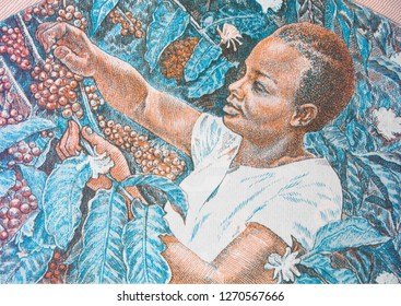 African woman picking coffee beans  on Ugandan 5 shilling banknote, Uganda money currency close up