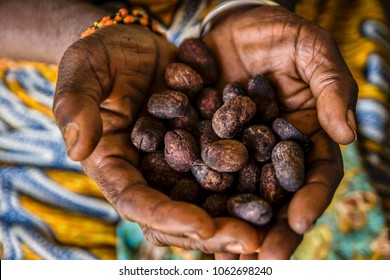 an african woman shows shea seeds