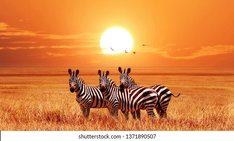 African zebras at beautiful orange sunset in the Serengeti National Park. Tanzania. Wild nature of Africa.
