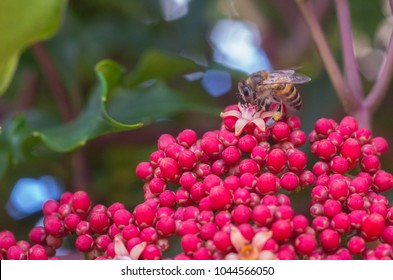 africanized bee on tiny flower