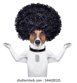 afro look dog with very big curly black hair