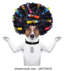 afro look dog with very big curly black hair and hair rollers