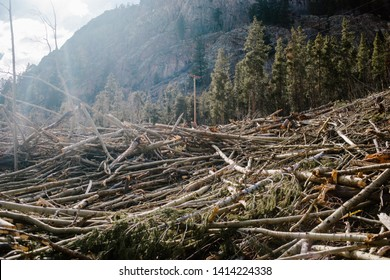 After the avalanche. Fallen trees scattered all over the ground after the avalanche in the moutain town.