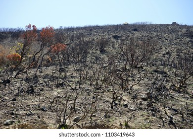 After disaster fire on the rock