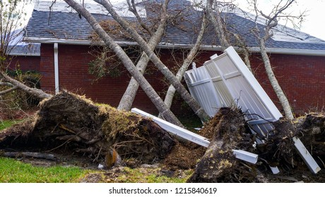 The after effect of Hurricane Michael, the tree was uprooted on the ground.