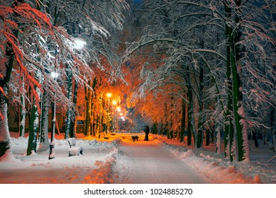 After a heavy snowfall, the fabulous beauty of the morning winter old park in Europe, Ukraine among the beautiful white oak trees pathways and roads illuminated by lanterns