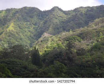 After a pleasent hike on Manoa Falls Trail people take a break enjoying the spectacular nature and waterfall