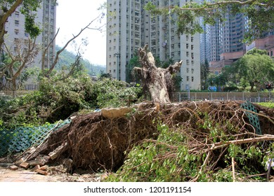 After the storm, Garden in the city, Big tree damaged uprooted