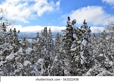 After the storm, snow lingers on green pine trees with mountains, lake and blue skies in the background.