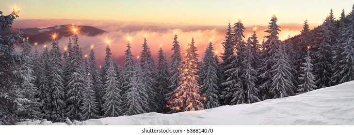 After the storm a strong frost frosted pine forests of the Carpathians in Ukraine, and the bright colors of the rising sun painted the top of the mountain Javornik Synyak between Yaremche Vorokhta