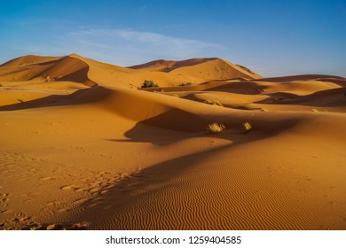 After sunrise the dunes in the Sahara desert in Marocco seem to be untouched.