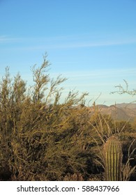 After an unusually heavy winter rain, McDowell Mountain Regional Park glistens in a new shade of freshened green, and looks full and lush.