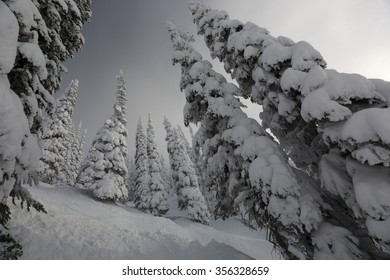 After a Winter storm in the Canadian Rockies
