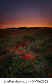 The afterglow of sunset taken against a field of poppies