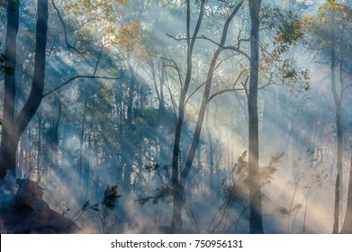 Aftermath of bushfire in eucalypt forest with shafts of oblique light in smoke clouds