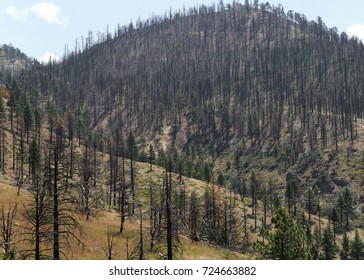 aftermath of a California forest fire, showing death and destruction of nature and natural disasters. black and burnt trees are all thats left.