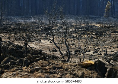 Aftermath of a devastating forest fire that hit Northern California after a very dry spell and a night with many lightning strikes.