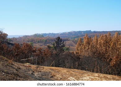 Aftermath of a ferocious bushfire. Trees and bushland burnt during bushfire in the Adelaide Hills, South Australia in December 2019.