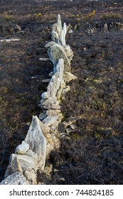 Aftermath of Gorse Fire, Ireland