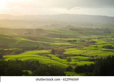 Afternoon light over lush green pastures of New Zealand