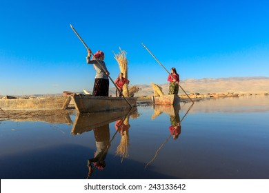 AFYONKARAHISAR,TURKEY - November 9,2013 :  Unidentified woman workers harvest reeds and bulrush from the Lake Eber in Afyon, and sells them to the matting industry.