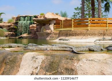 Agadir, Morocco - june 2018: crocodile Park