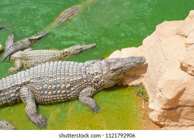 Agadir, Morocco - june 2018: crocodile Park