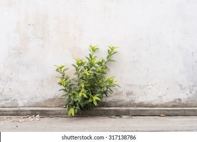 Against all odds -  a plant grows through a concrete wall