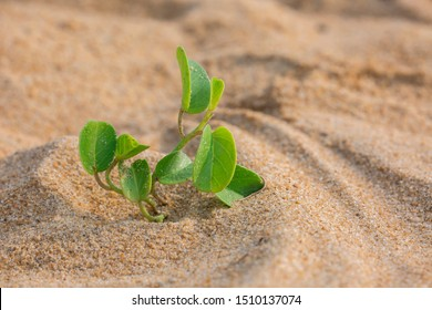 Against all odds. Young plant sprouting on beach sand.