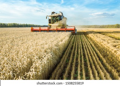 Against the backdrop of a sunny summer day and blue sky with clouds. Combine harvester harvesting ripe golden wheat on the field. The image of the agricultural industry