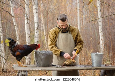 Against th beautiful autumn birch bearded white man in apron plucking a chicken. A big, beautiful, black and red cockerel at this time walks on the table and looks at the plucked body of the chicken