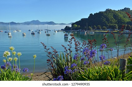 Agapanthus and Flax bushes in Full Bloom at Waikawa Bay, Marlborough Sounds on a Summer Morning in New Zealand.