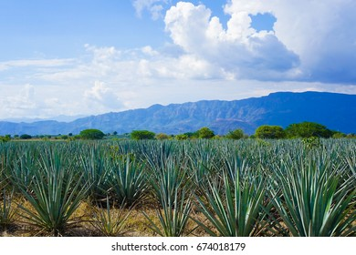 Agave Landscape and Ancient Industrial Facilities of Tequila - UNESCO World Heritage Site