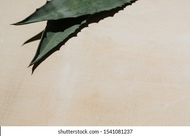 Agave leaves on white canvas, with neutral blank space.