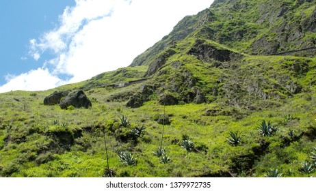 Agave plants on the mountain slope by the Devil's Nose Railroad near Alausi, Ecuador