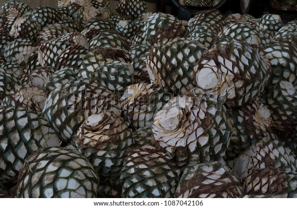 Agave Raw Material Do Tequila Stock Photo Edit Now 1087042106