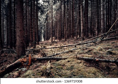 The age of dark spruce forest