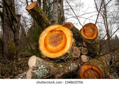 age rings in tree trunk, timber firewood deforestation