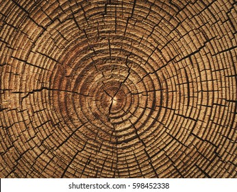 the age of the tree , sawn timber , wooden barrel , brown wood texture