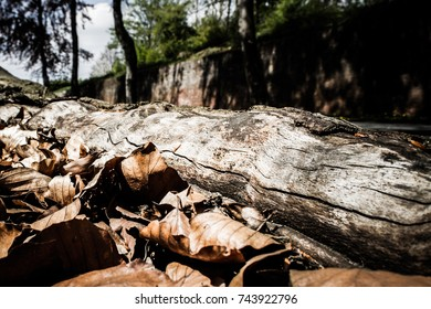 Aged grey log laying in autumn leaves