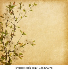 aged paper texture with Cherry Blossom