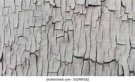 Aged wood texture. grey Old wooden abstract background.