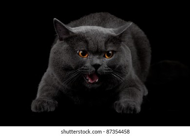 Aggressive black cat in dark room