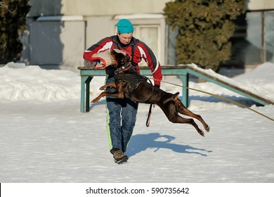 Animal Attack Images, Stock Photos & Vectors | Shutterstock