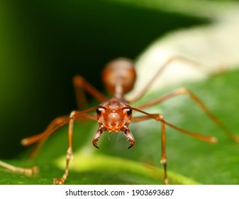 Aggressive mimics are predators which resemble ants sufficiently to be able to approach their prey successfully.