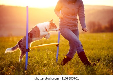 Agility and activity with sunrise landscape background, woman and dog jumping over a hurdles
