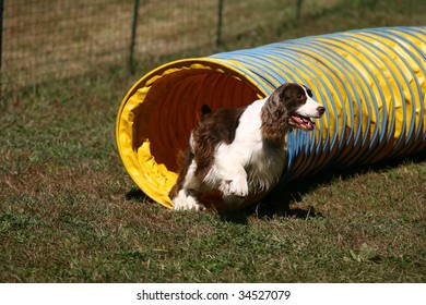 Agility Dog Exiting a Tunnel in Competition